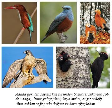 İstanköy Adası, Kos Adası, Fauna, doğal yaşam, kuş ve hayvan çeşitliliği