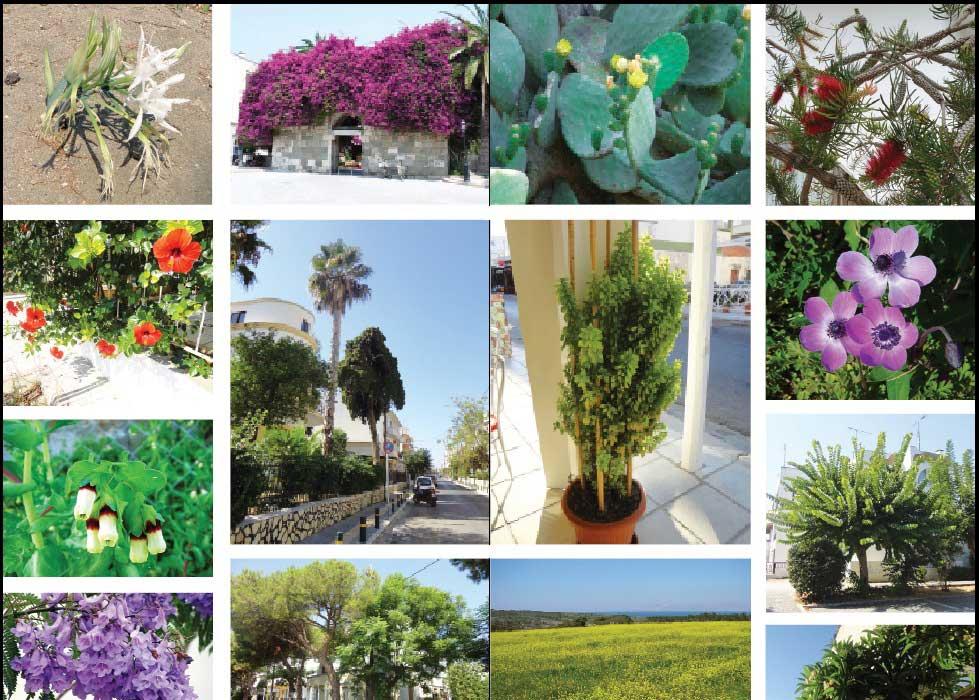 Kos Adası, İstanköy, Flora, bitki örtüsü, çiçek, ağaç türleri